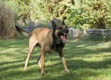 rabbia-canina