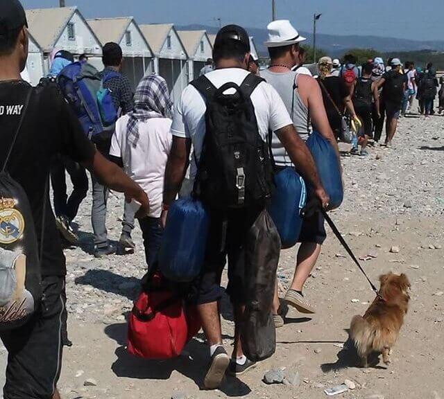 rifugiati-siriani-con-i-loro-animali-domestici