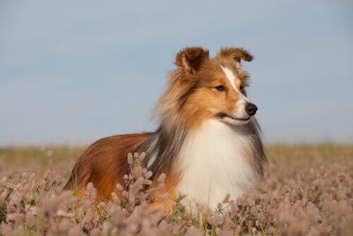 rimedi-contro-stitichezza-dei-cani