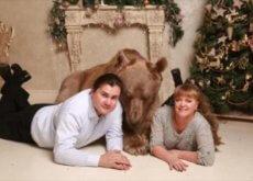 stepan-orso-domestico