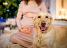 tenere-cane-durante-la-gravidanza