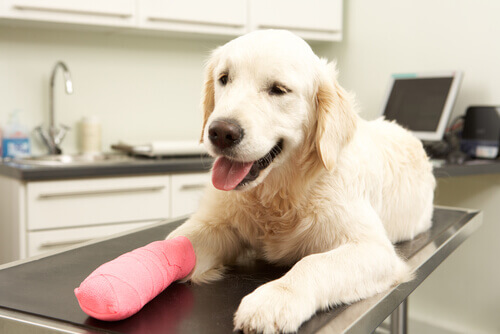 valigetta dei medicinali cani