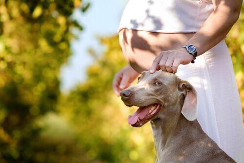 vivere-con-un-cane-durante-la-gravidanza