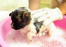 3-consigli-per-scegliere-il-migliore-shampoo-per-cani