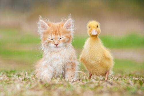 Gli animali esotici non sono animali domestici