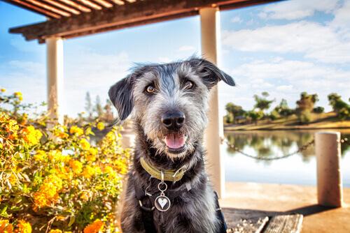 come-divertirvi-con-il-vostro-cane-in-estate