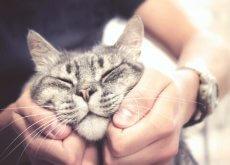 come-fare-le-coccole-a-un-gatto