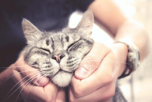 Come fare le coccole ad un gatto?