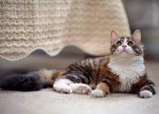 come-tenere-un-gatto-in-casa-nel-modo-migliore