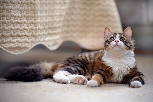 Come tenere un gatto in casa nel modo migliore