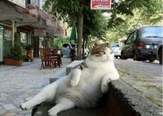 istanbul-dedica-una-statua-ad-una-famosa-gatta