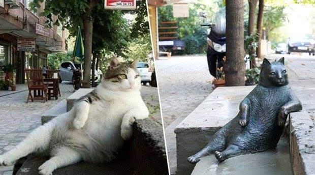 istanbul-dedica-una-statua-alla-gatta-tombili