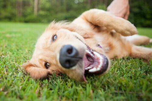 Parassiti intestinali, un pericolo per la salute del cane