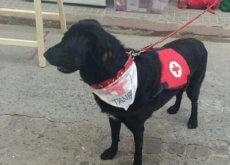 un-cane-maltrattato-diventa-assistente-sociale