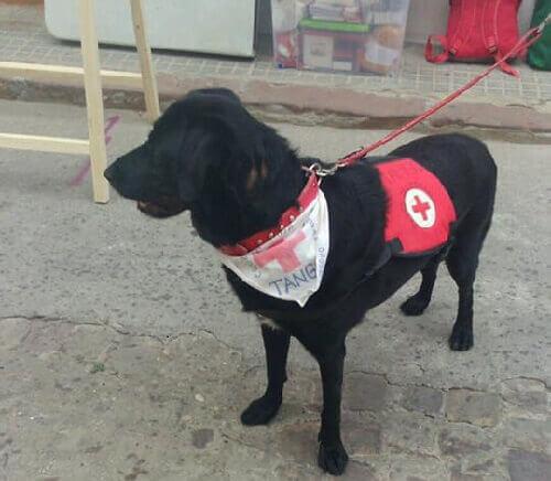 Un cane maltrattato diventa assistente sociale