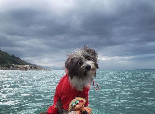 Vi presentiamo Nirvana, la cagnolina marinaia