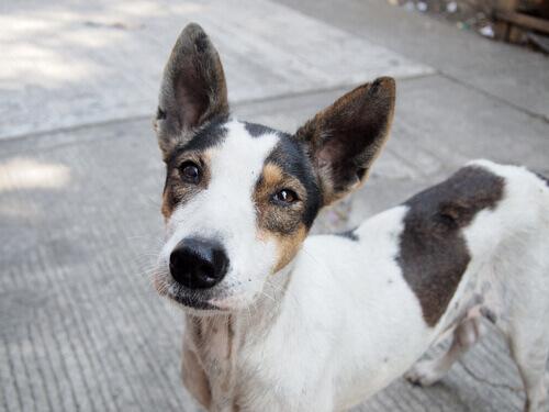 Adottare un cane randagio: un video toccante