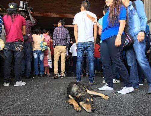 Centinaia di cani vengono abbandonati dai fedeli in basilica