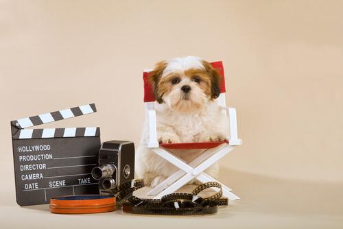 cane-attore-tv
