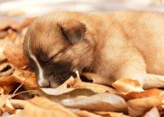 posizione cane che dorme
