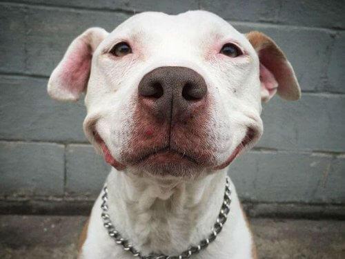 Brinsks, il cane che sorride da quando è stato salvato