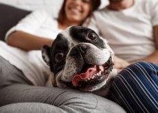 non trattare cani come esseri umani