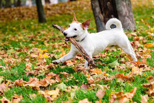 Giocare con i bastoni può essere pericoloso per i cani