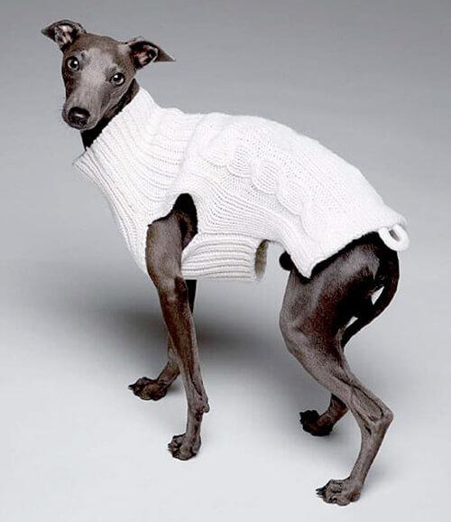 cane-con-cappottino