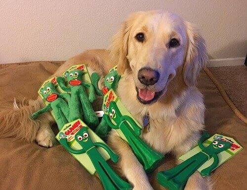 Reazione di un cane quando vede il suo padrone travestito come il suo giocattolo preferito