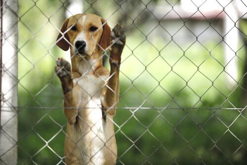 cane-dietro-una-rete
