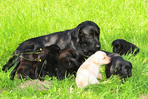 cagnolina con cuccioli sull'erba