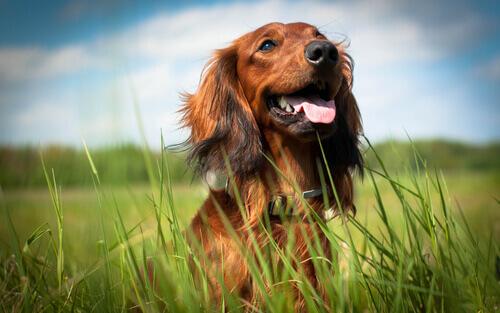 Come sapere se il vostro cane è felice