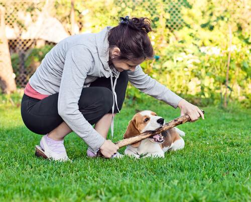 ragazza cane e bastoni