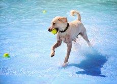 cane-in-acqua