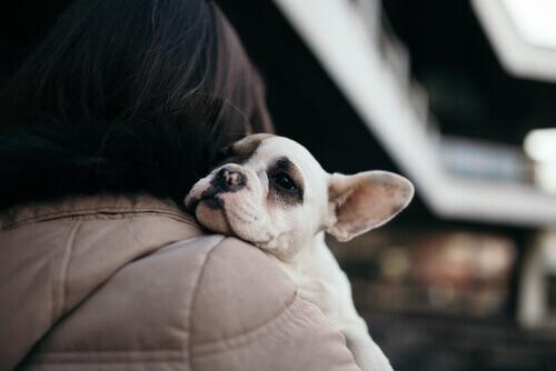 adottare-cane-in-braccio-alla-padrona