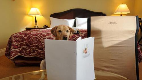 Hotel estivi che ammettono cani
