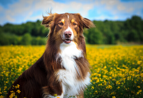 cane-nel-campo