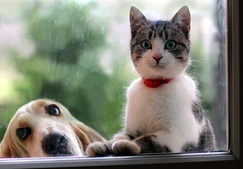 Cane o gatto? Facebook ci analizza in base alle nostre preferenze
