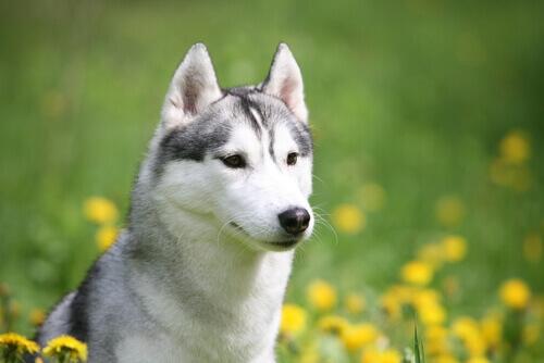 Salvata una cagnolina ferita rimasta in catene