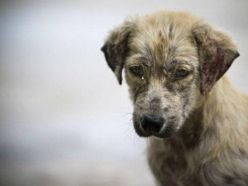 La vita di un cane randagio registrata da una GoPro