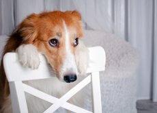 denunciare maltrattamento animali