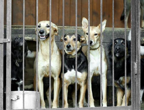 La Corea del Sud chiude il più grande mercato di carne di cane