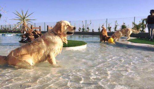 Aperto a Tenerife l'hotel per cani e gatti più lussuoso d'Europa