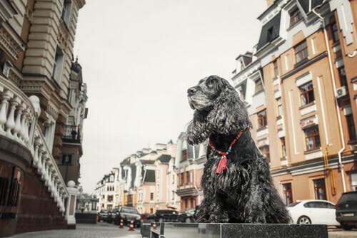 Cani modelli: un nuovo lavoro per il vostro animale