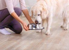 mantenere fresco il cibo per cani