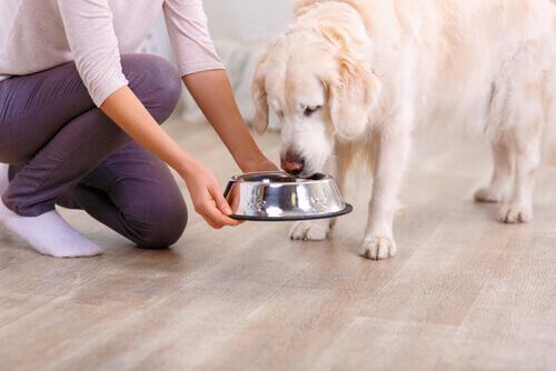 Consigli per mantenere fresco il cibo del cane