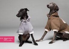 collezione-per-cani-adolfo dominguez