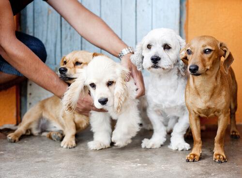 quattro cuccioli bianchi e marroni