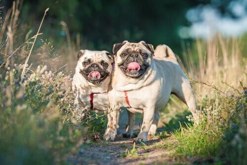 Trattare i gas maleodoranti nei cani