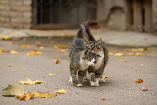 gatti marcano il territorio